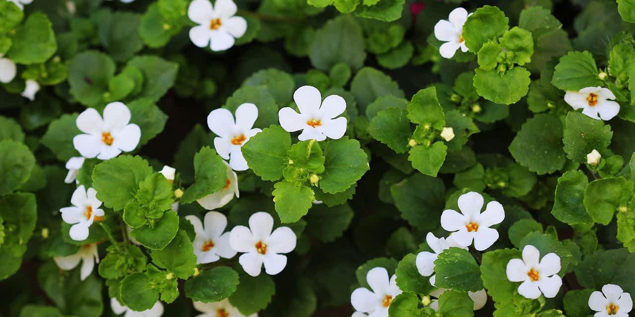 Der Schutz ayurvedischer Heilpflanzen