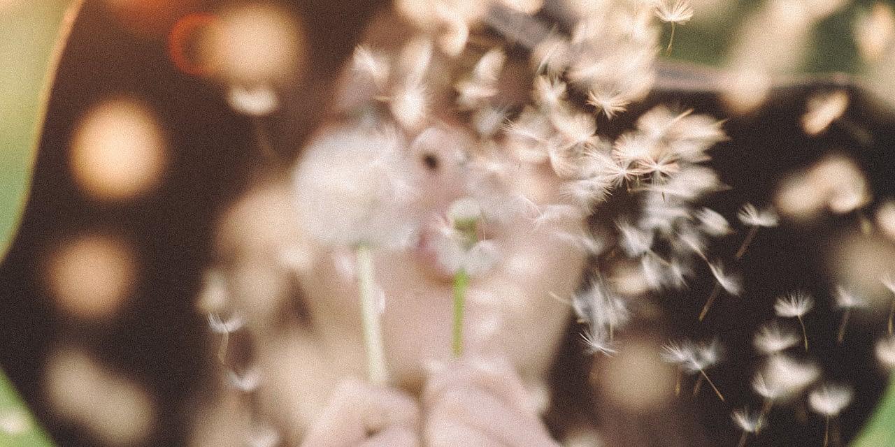 Allergien – Ursachen, Auswirkungen und Hilfen