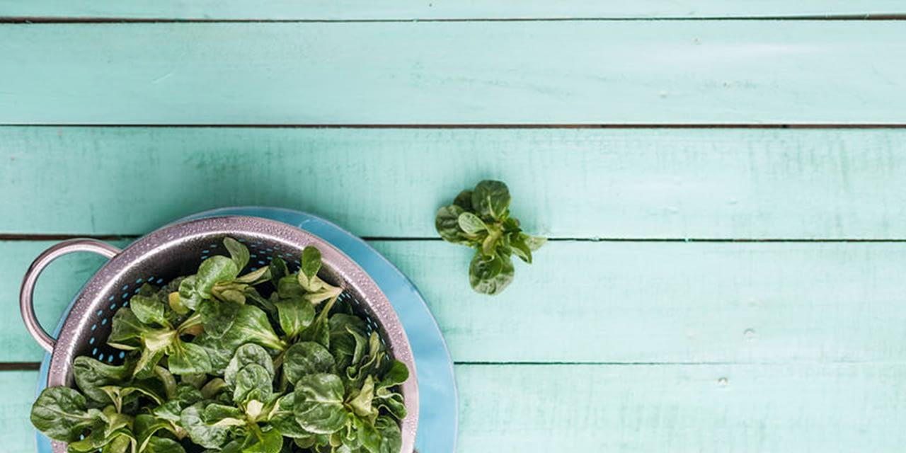 Feldsalat mit Postelein und Sprossen