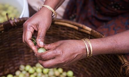 Chyavanprash – ein ayurvedisches Amlamus als Energiespender für Herbst und Winter