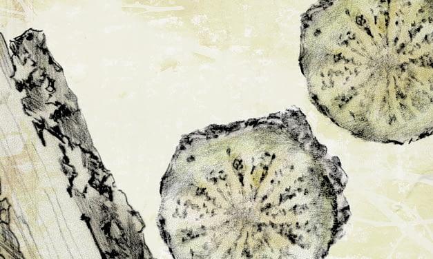 Guduchi – Tinospora cordifolia